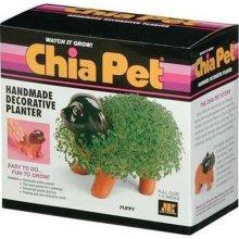 Chia Pet, the Pet that grows grass