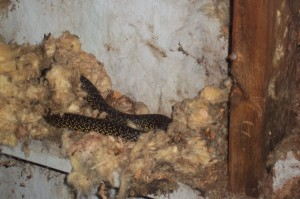 snake in shed
