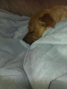 best soft blanket