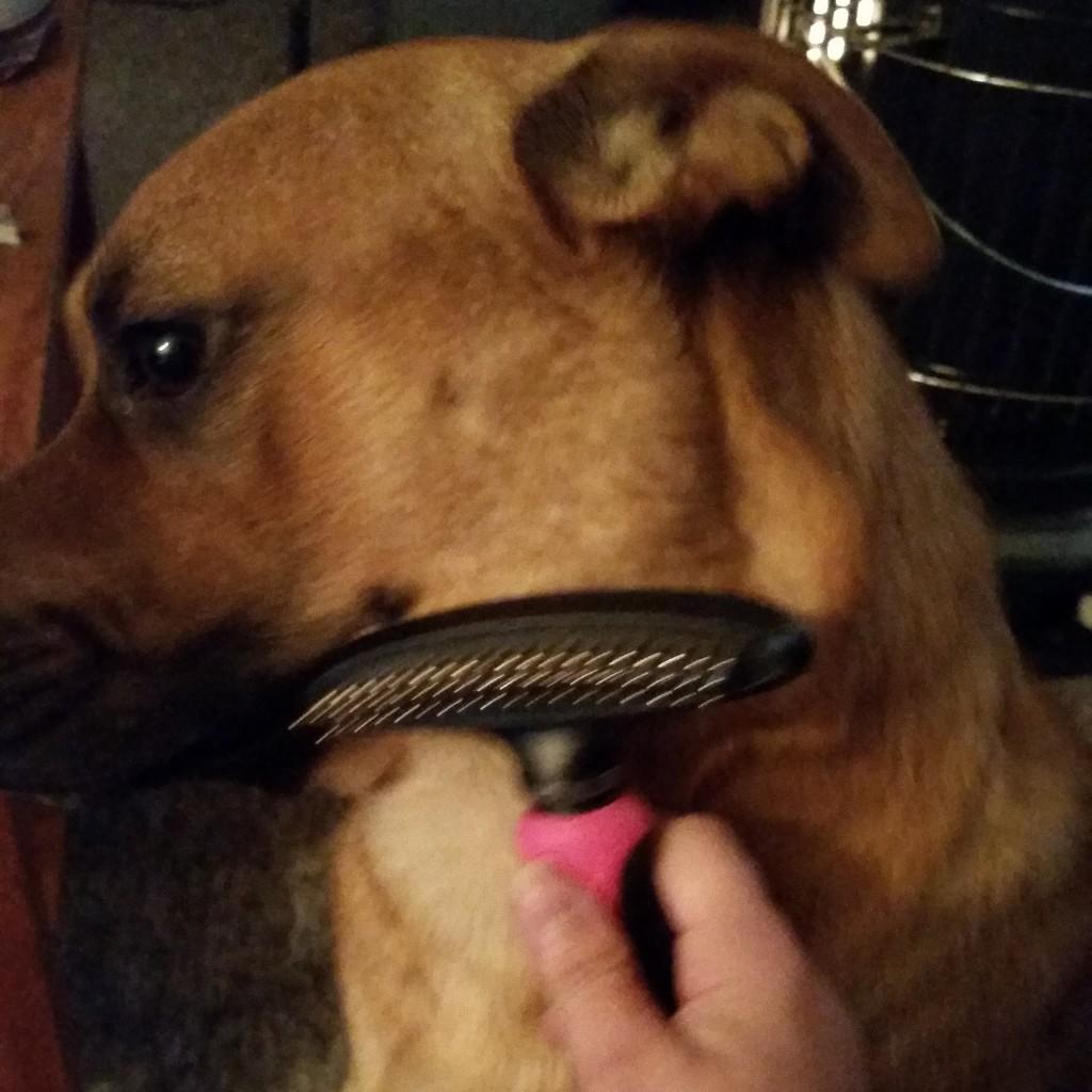brush review best furminator watch stop youtube deshedder sheds dog shedding product
