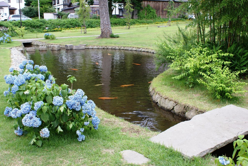 Five Ecological Benefits Of Building A Pond