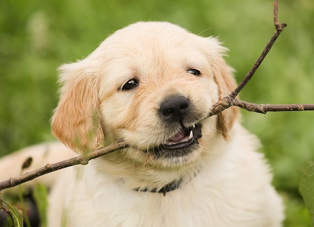 puppy-1189067_640