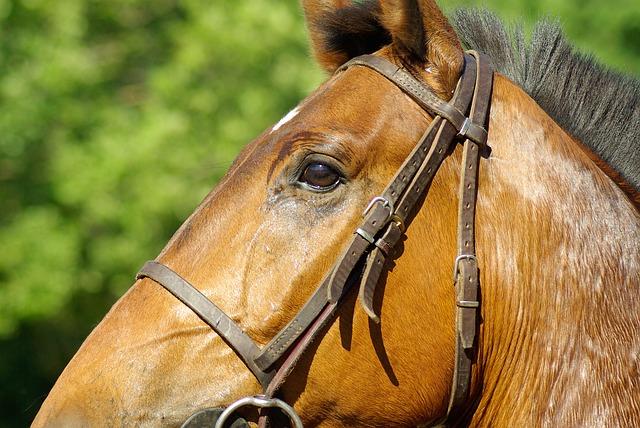 horse-800851_640