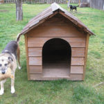Tops Tips For The Ultimate Dog House