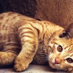 Cats Need As Much Care As Dogs Do You Know!