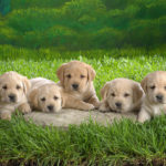 Tips for Choosing a Dog Breeder When You Want to Buy a Puppy