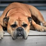Your Guide to Saving Money as a Pet Owner